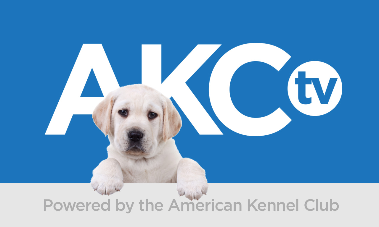 AKC.TV - It's Good Dog TV! | AKC.TV