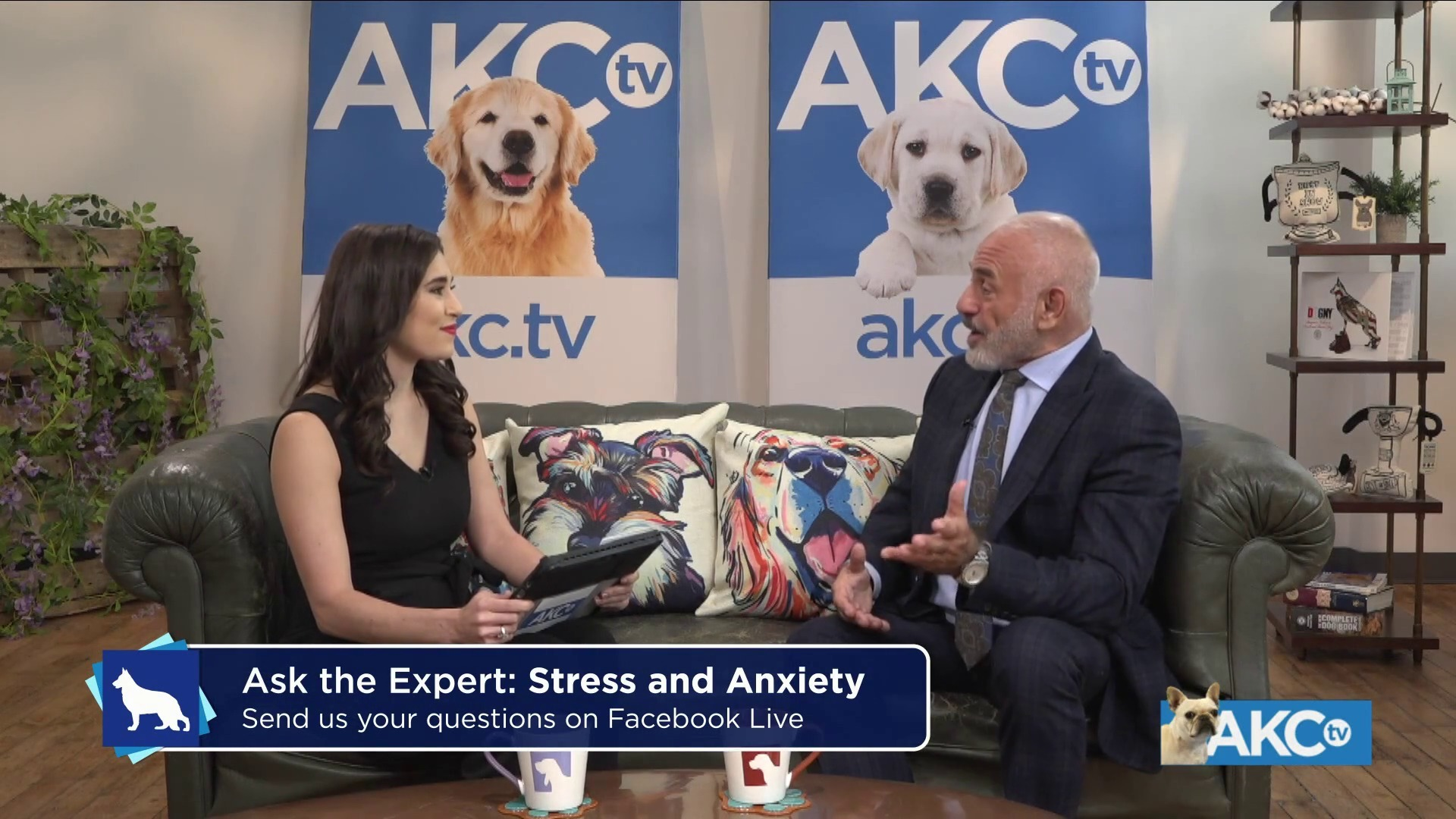 Ask The Expert - Ask The Expert - Dog Anxiety | February 6, 2019