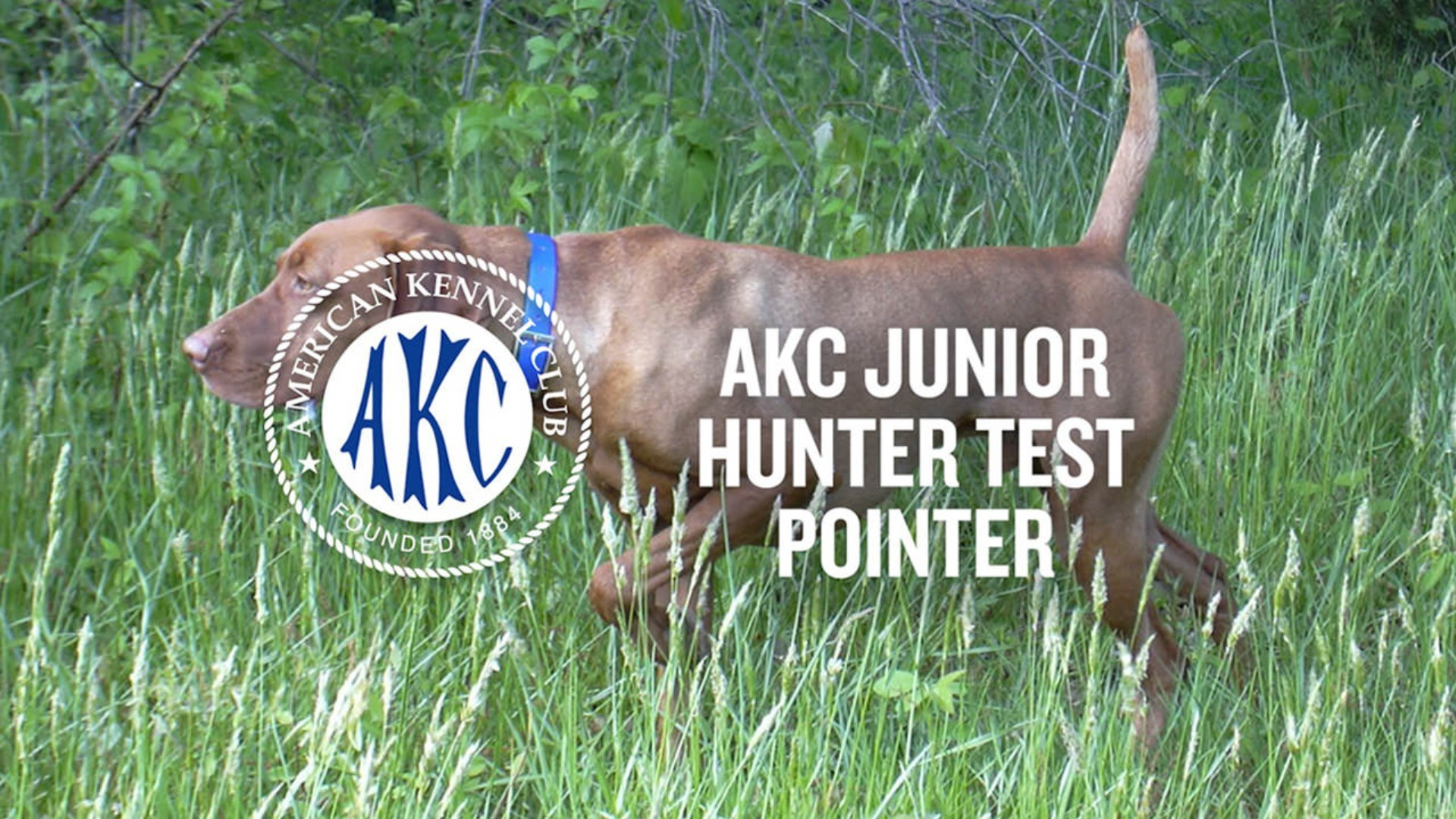 Intro to AKC - AKC Junior Hunter Test for Pointing Breeds | Intro to Dog Sports | AKC.TV