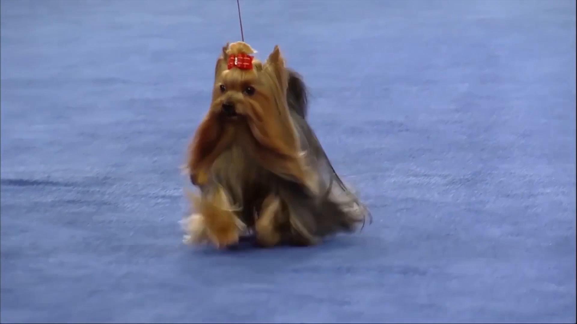 Dogs On Flipboard American Kennel Club Pets Texas